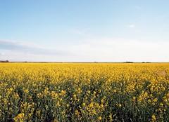 roll37006-2 (k5jvc) Tags: mamiya 645 pro ektar 100 fields landscape oklahoma okarche