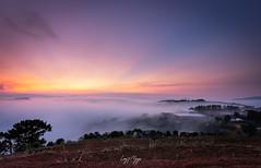 A sea of fog in Da Lat, Vietnam (longtnguyen) Tags: centralvietnam dalat vietnam cloud fog foggy forest grass green highland hill landscape mist mountain nature scenery sunrise travel tree
