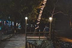 _MG_3206 (waychen_c) Tags: philippines ph visayas centralvisayas bohol provinceofbohol panglaoisland panglao municipalityofpanglao alonabeach coast coastline beach night nightscape tree coconuttree cebutour2019 菲律賓 維薩亞斯 維薩亞斯群島 中維薩亞斯 保和 保和省 邦勞島 邦勞 阿羅那海灘 椰子 椰子樹 海灘 2019宿霧旅行 南洋