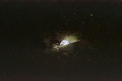 (Just A Stray Cat) Tags: konica minolta centuria 800 expired montreal canada quebec street urban disco stray cat feline felines kitty kittens kitties cats gato 35mm 35 mm film analog analogue stylus epic mju olympus ii mjuii