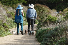 Walk Six Dogs (ivlys) Tags: usa california route1 pazifik pacific ozean ocean küste coast rau rough hund dog landschaft landscape natur nature ivlys
