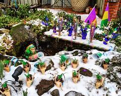 snowy Mardi Gras (ekelly80) Tags: dc washingtondc spring march2019 snowy snowday snow mardigras beads barbies qstreetbarbies
