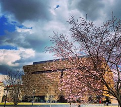 stormy spring skies (ekelly80) Tags: dc washingtondc spring march2019 nationalmall nationalafricanamericanhistorymuseum stormy skies clouds flowers pink cherryblossoms light