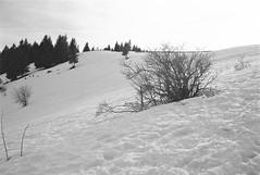 vers le col… (JJ_REY) Tags: vosges montagnes mountains hiver winter neige snow bw film rollei superpan200 minolta alf rangefinder