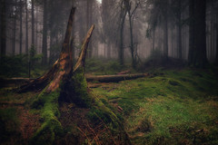 forest series #332 (Stefan A. Schmidt) Tags: forest fog germany fairytale tree trung trees moss ngc