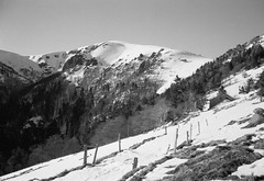 col… (JJ_REY) Tags: vosges montagnes mountains hiver winter neige snow bw film rollei superpan200 minolta alf rangefinder