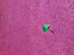Street photography (Mah Nava) Tags: street photography blatt spain spanien pink green minimal minimalist leaf