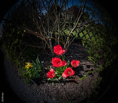 springtime-6607 (clickraa) Tags: blumen garten frühling