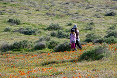 Latina Mother and Daughter in front of desert California Poppy f (toleran76) Tags: california desertsuperbloom flower lisa nature nikki baby background beautiful beauty californica cheerful child childhood couple cute daughter desert eschscholzia ethnic family field fun golden happiness happy kid latina laughing love meadow mother motheranddaughter mothersday orange outdoors outside pano panorama parent park people poppy smiling summer sunny two view woman young