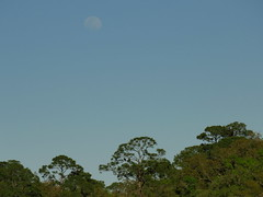 A nest, a nearly full moon, and 2 young bald eagles enjoying the view
