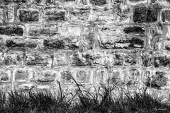 au pied du mur. (Pyc Assaut) Tags: au pied du mur aupieddumur wall pierres pierre stone stones herbe minimal minimalisme extérieur pyc5pyc pyc5pycphotography pycassaut pierreyvescugni pierreyvescugniphotography nikon nikonz6 z6 noirblanc noir blanc black white blackwhite