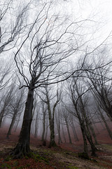 Misty forest (Massimo_Discepoli) Tags: trees moody fog winter beech haunting creepy silence forest