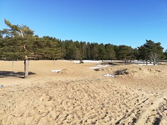 Дюны (andreybarutkin) Tags: gulfoffinland финскийзалив россия санктпетербург пляж дюны красотароссии природа свежийвоздух russia nature dunes