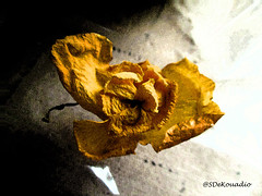Wilted Flower (Stephenie DeKouadio) Tags: art artistic artwork painting colorful yellow darkandlight light beautiful beauty shadow shadows macro macroabstract macropainting macrophotography abstract abstractart abstractflower abstractflowers abstractpainting flower flowersabstract flowerabstract