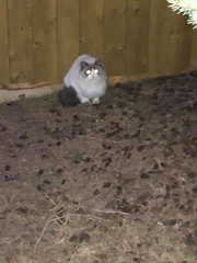 Sighting of a rag doll in #Killarney. Can't catch it but will keep trying - has a collar. Pls RT share help to find family YYC Pet Recovery shared a post. Is anyone missing a rag doll in Killarney? Can't catch it but will keep trying - has a collar. 2019- (yycpetrecovery) Tags: ifttt april 17 2019 0111am