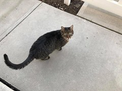 Sighting tabby cat in #mckenzietowne. Pls RT share help to find family YYC Pet Recovery shared a post. Don't know if this handsome boy is lost or just visiting ? Hope someone recognizes him ' 2019-04-17T02:18:55.000Z by YYC Pet Recovery original fb post-c (yycpetrecovery) Tags: ifttt april 17 2019 0111am