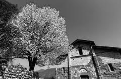 San Giorgio in Lemine (Chiaro Chiari) Tags: church art arte italia italy lombardy bergamo chiesa tree albero monocromo bianco nero bw bn sky cielo culture cultura