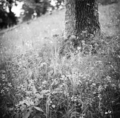Cesis, Latvia (nikolaijan) Tags: yashica 124g yashicamat ilford panf50 panfplus 120 film blackandwhite bw cesis latvia 6x6