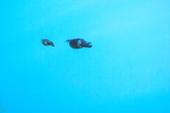 20181117-DSC_6221.jpg (d3_plus) Tags: drive fish marinesports apnea 晴れ fishingport 海岸 景色 185mm watersports sky 風景 ニコン 素潜り ウォータープルーフケース 静岡 nikon1j4 漁港 海 地形 scenery 息こらえ潜水 ズーム nikon1 waterproofcase landscape nature izu sea 伊豆半島 j4 自然 skindiving wpn3 japan 静岡県 50mmf18 50mm nikonwpn3 水中 スキンダイビング 魚 生物 peninsula ニコン1 伊豆 185mmf18 fine snorkeling 1nikkor185mmf18 port beach ビーチ animal underwater diving eastizu 空 shizuoka 日本 東伊豆 マリンスポーツ シュノーケリング fineday
