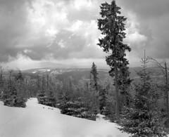 (str.ainer) Tags: wolken clouds baum bäume trees winter rachel nationalparkbayerischerwald nationalpark bayerischerwald bavarianforest mamiya rb67 sekor sekormacro140mm ilford fp4 adox fx39 hugin gimp film