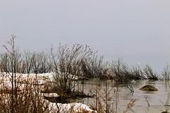 "Lake Michigan ""Disappeared"" (Jan Nagalski) Tags: ice snow mist fog gray grass tallgrass reflection silhouettes spring leelanaupeninsula northwestmichigan michigan printemps neige glace weather jannagalski jannagal lakemichigan greatlakes lake"