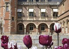 La Dominante .... (OGNB) Tags: canon6dmarkii landscape paysage pourpre purple architecture nature château flowers fleurs tulipes