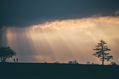 Divine Skies (freyavev) Tags: divine silhouette sillhouettes nature tree rays light telelens renningen malmsheim deutschland germany badenwürttemberg people dog sky vsco mikasniftyfifty outdoor canon canon700d