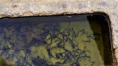 WATER (Nil Inglis) Tags: art artwork nature face mother monastery photo photography portraitphotography portrait spirit composition contemporaryartist contemporary create colour vision beautiful nil nilinglis nilinglisaltés life light zest