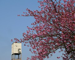 Photo of Spring in Shipley