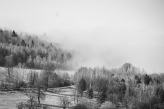 Fog is coming (Stan Ramones) Tags: 2019 bw nature canon tamron forest fog
