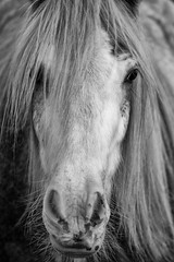 D'si Belle (Yo Gui) Tags: cheval horse bw blackandwhite portrait animal canon 6d