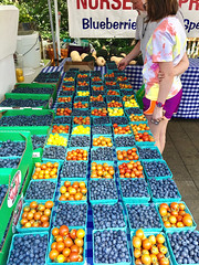"""Decisions, Decisions..."" (Halvorsong) Tags: summer summertime blueberries berries farm farmers farmersmarket yum food color red blue art explore discover farming produce usa america americana composition contrast commerce capitalism weekend outdoor outside halvorsong photosafari upick earth bounty blessings abundance thanksgiving soil life nature projectamerica"