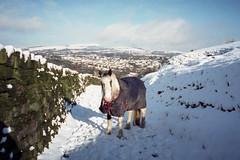 Winter Horse (Matthew_Hartley) Tags: horse winter snow snowy helmshore haslingden rossendale lancashire northwest england uk canon ixus elph z70 film aps advancedphotosystem fujifilm fuji nexia 200