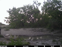 2019-04-17 19:30:15 - Crystal Creek 2 (Crystal Creek Bowhunting) Tags: crystal creek bowhunting trail cam