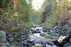 2009.10.24-015 (MrBigDog2k) Tags: trees avenueofthegiants redwoods creeks