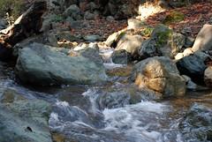2009.10.24-017 (MrBigDog2k) Tags: trees avenueofthegiants redwoods creeks