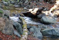 2009.10.24-019 (MrBigDog2k) Tags: trees avenueofthegiants redwoods creeks