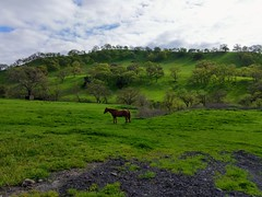 Missing Lone Ranger (tourtrophy) Tags: horse livermore googlepixel3