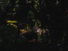 DSCF5629 (森羅) Tags: fujifilm fuji gfx50r gf63mm f28 gfx 50r moonlight creek defoliation moss
