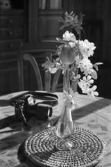 Nouvel essai des fleurs (michel.lample) Tags: michellample contax 159mm tamron pyrocat kodak tmax400 fleurs