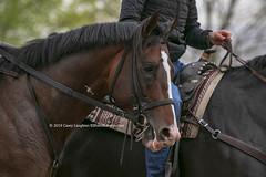 War of Will (Casey Lynn Photos) Tags: keeneland 2019 2019copyright kentucky horse horseracing racehorse racing track racetrack canon canonphotography canonusa canon7dmii canonlens canonphoto canoncamera warofwill