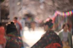 Kawagoe SAKURA08 (sunuq) Tags: kawagoe 2019年 japan canon eos 5dsr ペッツバール ロモグラフィ lomography zenit petzval ぼけ bokeh 桜 川越 tree cherry 蓮馨寺 日本 着物 kimono