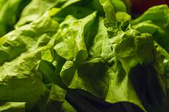 Lettuce Test Shot (Alvimann) Tags: alvimann lettuce vegetal vegatable