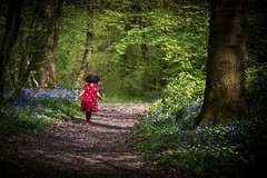 Having Fun (Kam Sanghera) Tags: bluebell bluebells poultonwood poulton wood kent aldington children running kids having fun landscape red dress shoes canon eos 5d mark iii ef70200mm f28l is ii usm ef 70200 mm f28 l uk england countryside spring springtime toddler infant