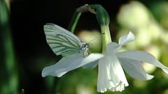Zandberg (Omroep Zeeland) Tags: bloemen vlinder