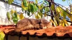 (cod_gabriel) Tags: cat pisica pisică romania roumanie românia rumänien roemenië bucuresti bucurești bucharest bucarest bucareste snapseed bukarest boekarest bucurestiinoi bucureștiinoi rumania rumanía roménia romênia