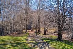 Sentiero nel bosco spoglio (giorgiorodano46) Tags: aprile2019 april 2019 giorgiorodano rascino pianodirascino cicolano lazio italy breathtakinglandscapes