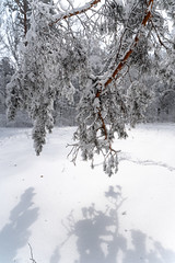DSC09571 (Дмитрий Панкратьев) Tags: деревья лес природа снег