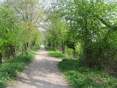Flitch Way near Takeley, Essex (golygfa) Tags: sustrans disusedrailway flitchway essex spring cycling ncr nationalcycleroute