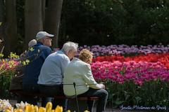 DN9A7588 (Josette Veltman) Tags: keukenhof lisse flowers dutch bloemen toeristisch canon nederland tulpen